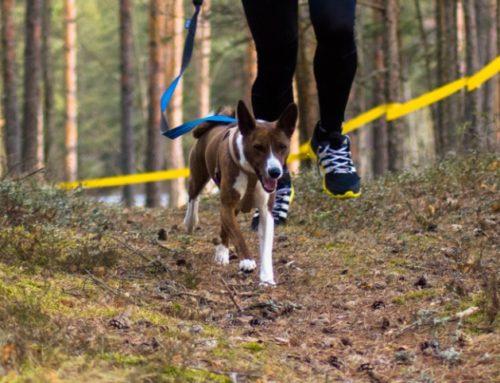 Lemmikuga rajale: koerte luitekross ja -retk ootavad osalema