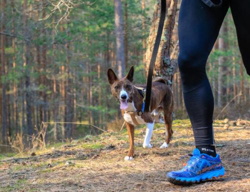 Luitejooksul lippab enam kui sada koera